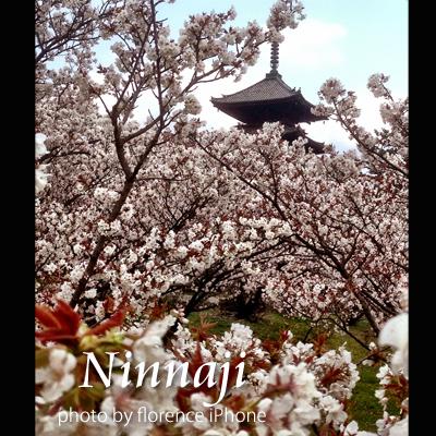 仁和寺130401_edited-1