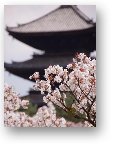 仁和寺130403_edited-1