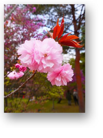 仁和寺130406_edited-1