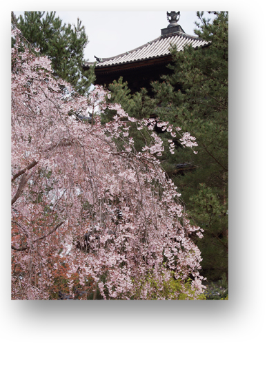 仁和寺130407_edited-1
