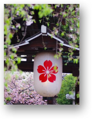 平野神社130408_edited-1
