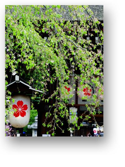 平野神社130409_edited-1
