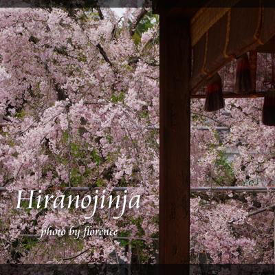 平野神社130401_edited-1