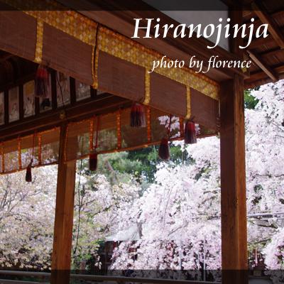 平野神社130402_edited-1
