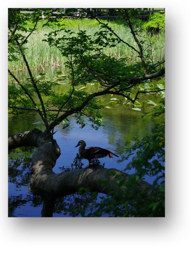 石神井公園130504_edited-1