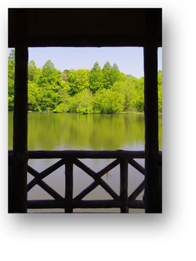 石神井公園130505_edited-1
