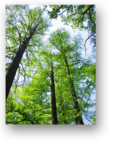 石神井公園130506_edited-1