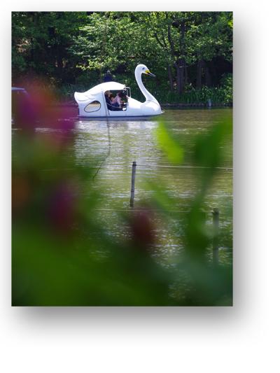 石神井公園130507_edited-1