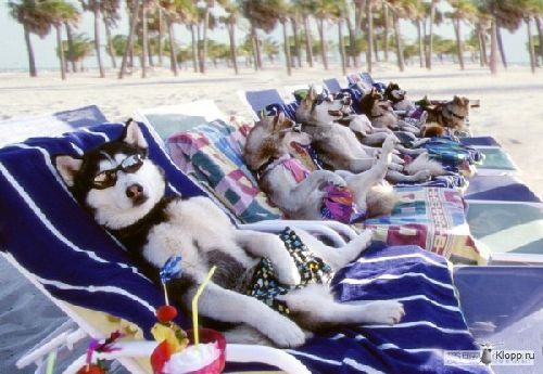 1342761098_dogs_beach_2013100512025677e.jpg