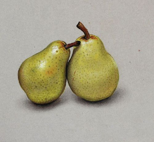 9-pears-realistic-drawing-by-marcello-barenghi.jpg