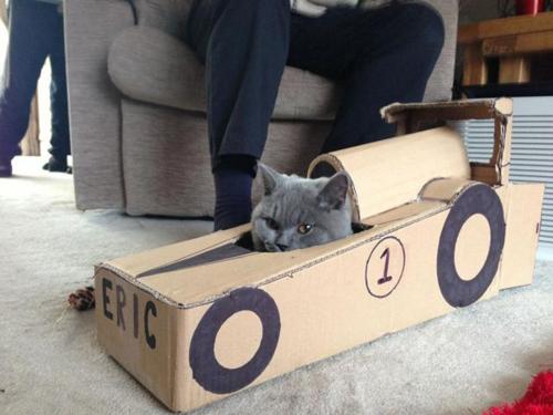 cat_6-13_12_20130613140114.jpg