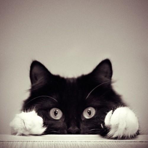 cat_6-13_13_20130613140113.jpg