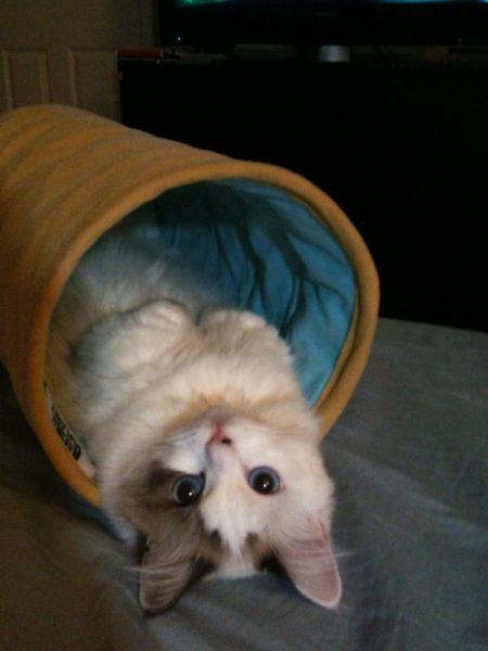 cat_6-13_14_20130613140112.jpg