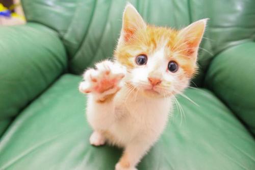 cat_6-13_17.jpg