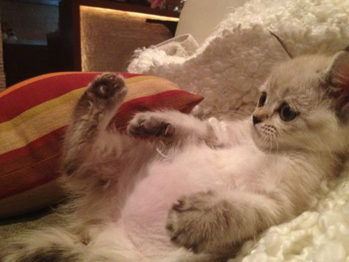 cat_6-13_18.jpg