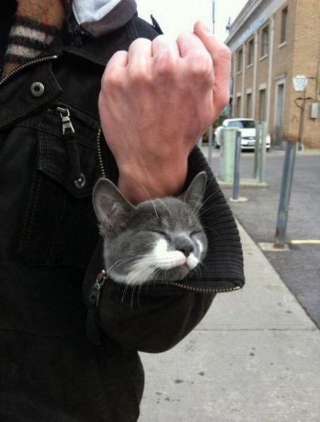 cat_6-13_1_20130613135846.jpg