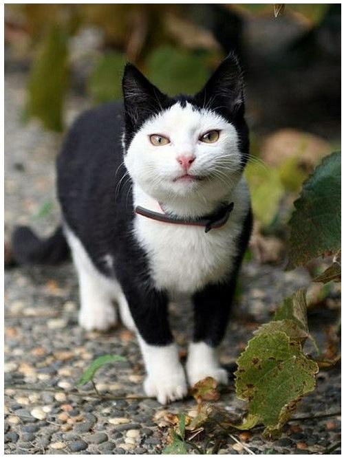 cat_6-13_2_20130613135851.jpg