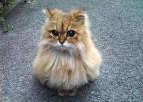 cat_6-13_3_20130613135901.jpg