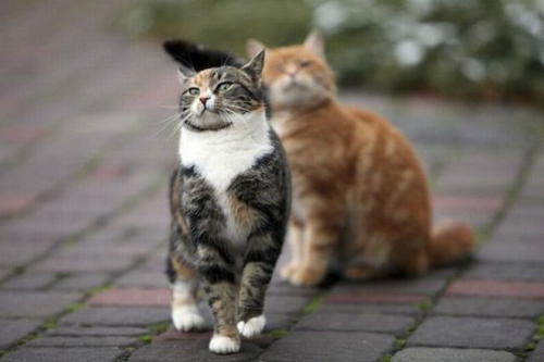 cat_6-13_6_20130613140003.jpg