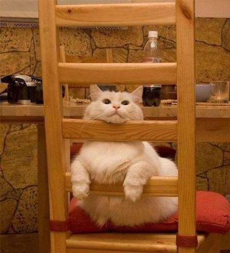 cat_6-13_7_20130613140001.jpg
