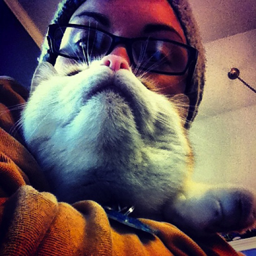 catbeards2.jpg
