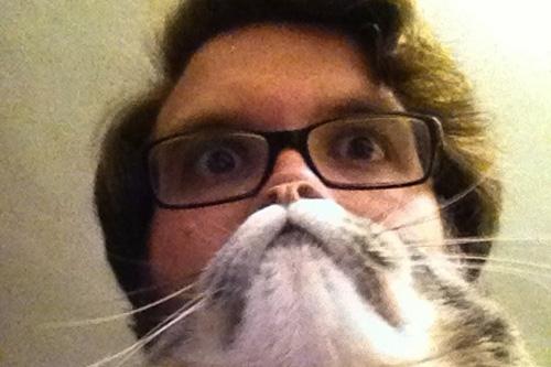 catbeards3.jpg