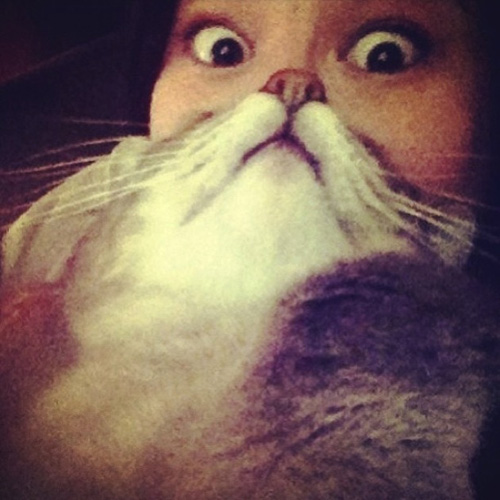 catbeards4.jpg