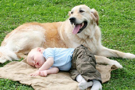 dog-and-baby.jpg