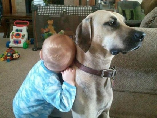 dogs-dogs-dogs-dogs-dogs-09.jpg