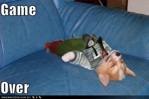 funny-dog-pictures-the-game-is-over.jpg