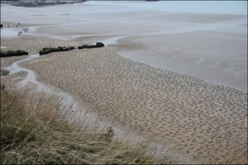 normandy-body-sand-stencils-beach-2.jpg