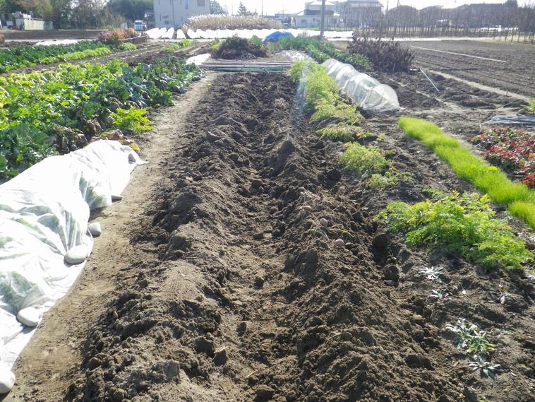 ジャガイモ収穫後13_12_14