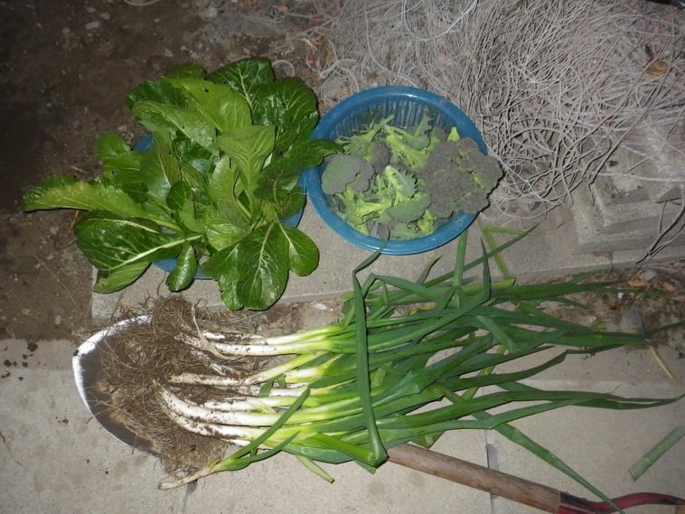 収穫13_12_31