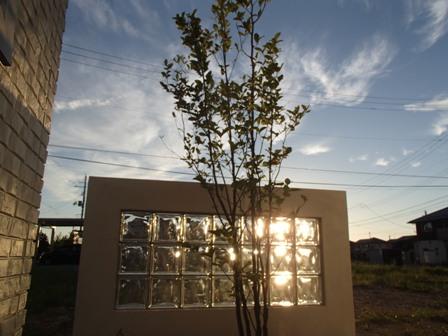 坪庭 シャラの木 飾り塀