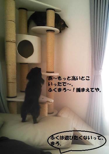 80_marofuku1_130820.jpg