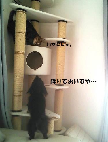 80_marofuku2_130820.jpg
