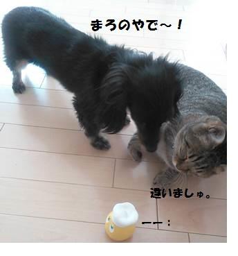 81_marofuku1_130826.jpg