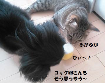 81_marofuku3_130826.jpg