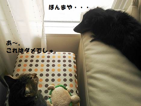 82_marofuku1_130830.jpg