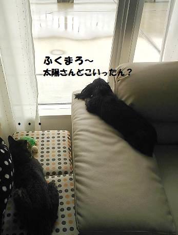 82_marofuku2_130830.jpg