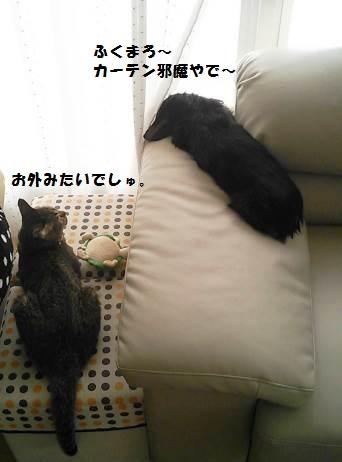 82_marofuku_130830.jpg