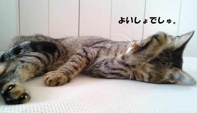 88_marofuku1_130923.jpg