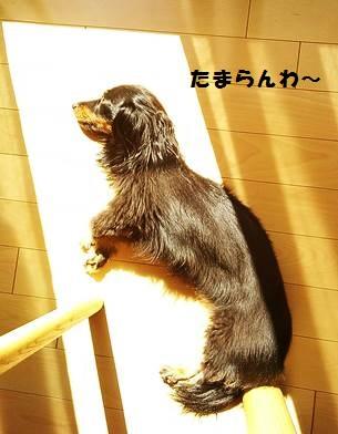 92_marofuku1_131012.jpg