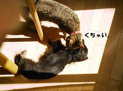 92_marofuku3_131012.jpg