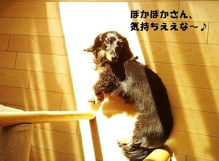 92_marofuku_131012.jpg