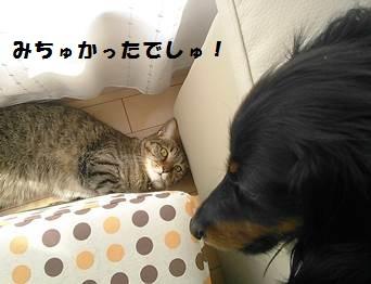 93_marofuku2_131021.jpg