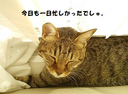 93_marofuku7_131021.jpg
