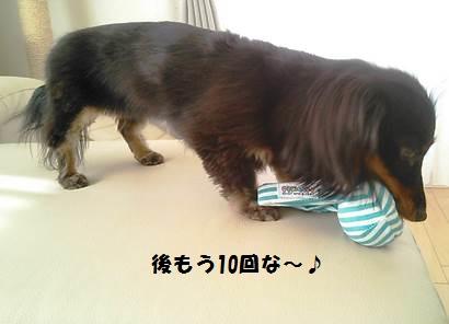 94_marofuku3_131025.jpg