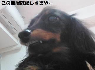 94_marofuku6_131025.jpg