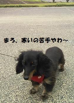 94_marofuku9_131025.jpg